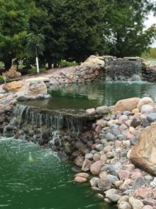 Pond Picture